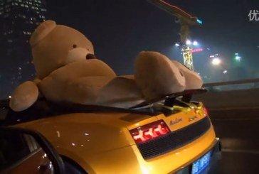 Insolite – Un ours transporté en Lamborghini Gallardo