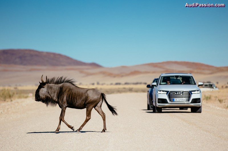 derniers-tests-audi-q7-namibie-001