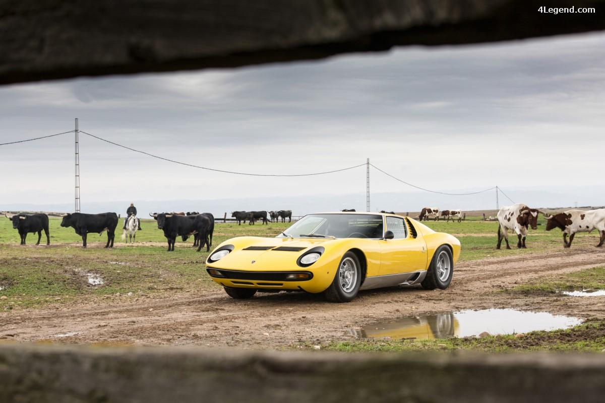 50 ans de la Lamborghini Miura - Fin des célébrations avec la visite d'un élevage de taureaux en Espagne