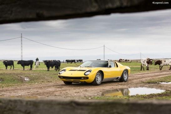 50 ans de la Lamborghini Miura – Fin des célébrations avec la visite d'un élevage de taureaux en Espagne