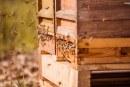 Première récolte de miel de l'année à Porsche Leipzig