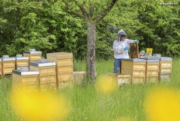 Porsche installe 650 000 abeilles à Zuffenhausen